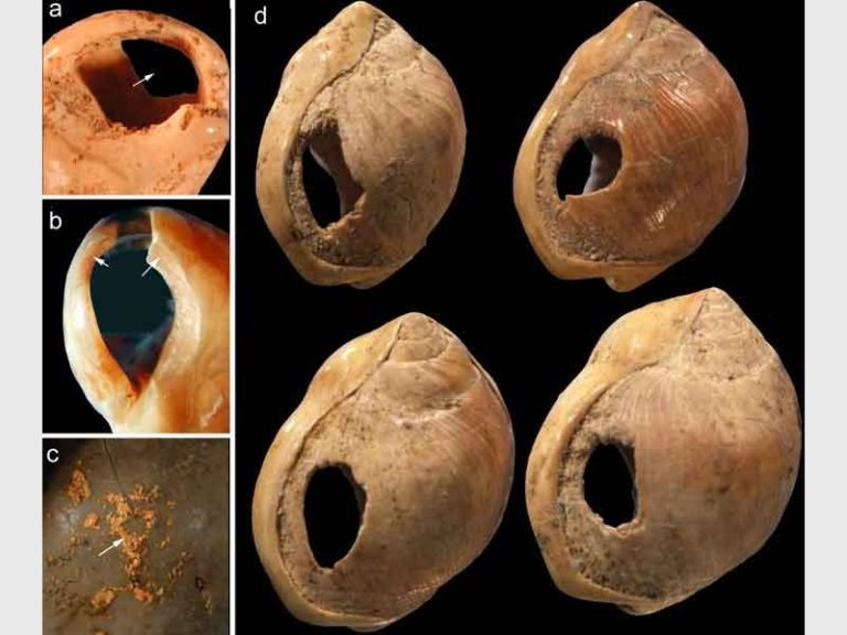 Early jewellery, a set of shell beads estimated to be 75 000 years old, is discovered in South Africa